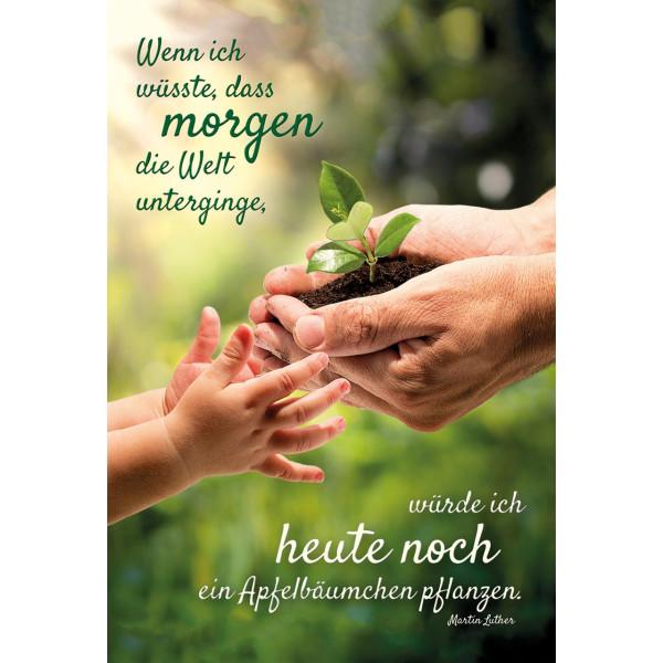Hände Pflanze