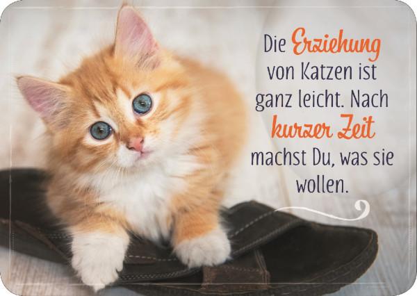 Postkarte 'Die Erziehung von Katzen ist ganz leicht. Nach kurzer Zeit machst du